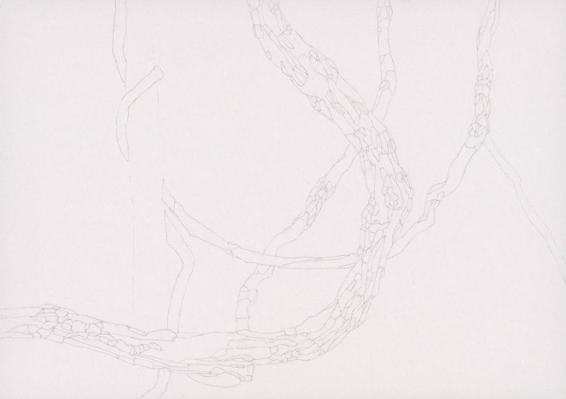 Project Vertical Landscape, Lianas, 2014