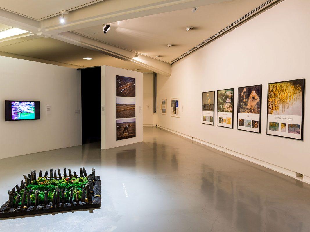 Vue de l'exposition « Cosmogonies, au gré des éléments »
