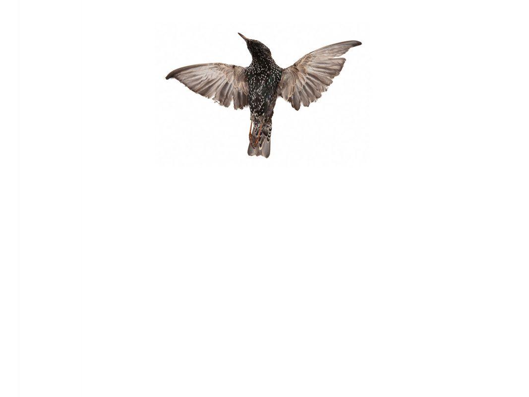Oiseau, 2014